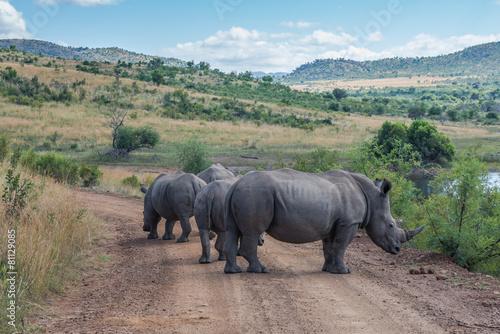 Foto op Canvas Zuid Afrika Rhinoceros, Pilanesberg national park. South Africa.