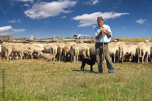 Cuadros en Lienzo Shepherd with his dog and grazing sheep