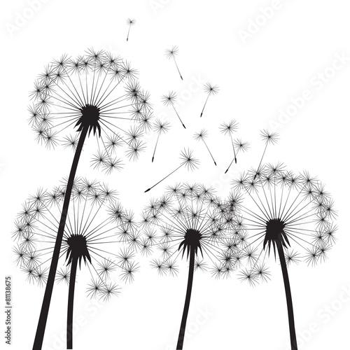 dandelions-czarny-wektor