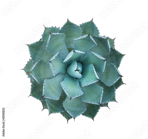 Sharp pointed agave plant leaves Wallpaper Mural