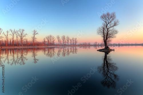 Poster Lac / Etang Lake with tree at sunrise, Slovakia