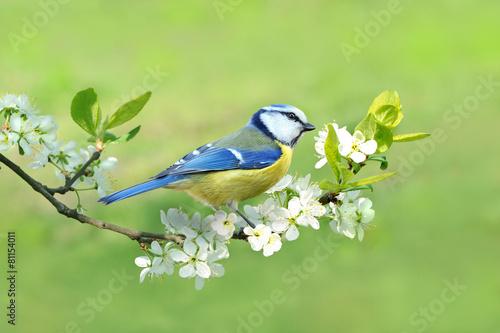 Deurstickers Vogel Frühling 331
