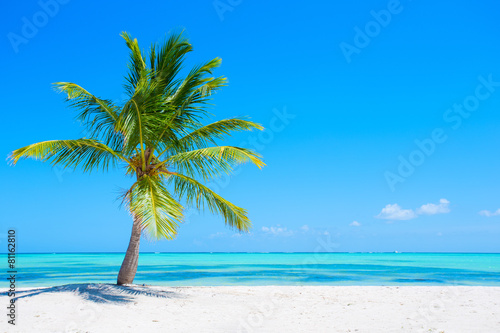 Foto op Canvas Palm boom Palm tree on tropical beach