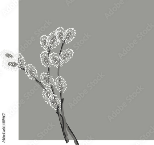 Fototapeta Pussy willow branches