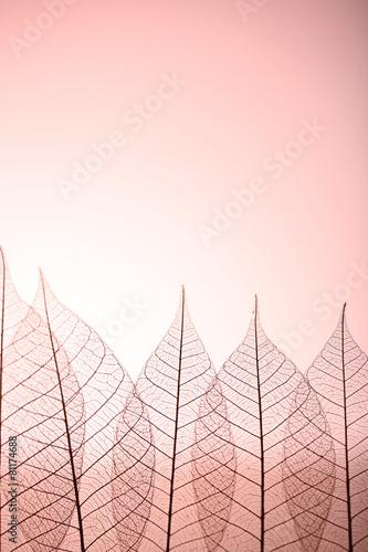 Recess Fitting Decorative skeleton leaves Skeleton leaves on pink background, close up