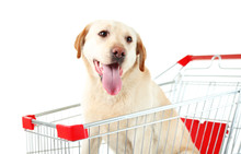 Dog In Shopping Cart Isolated ...