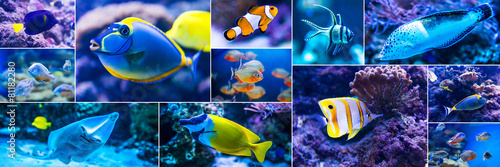 Poster de jardin Plongée Colorful fish in aquarium saltwater world