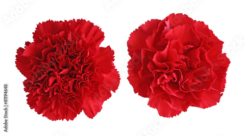 Photo  Red Carnation flowers