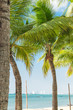 Coconut tree on beach