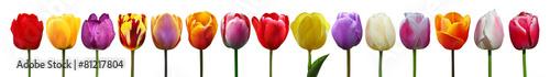 Deurstickers Tulp Wunderschöne Tulpen
