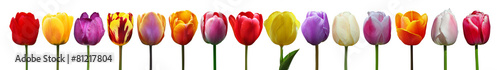 Foto op Aluminium Tulp Wunderschöne Tulpen