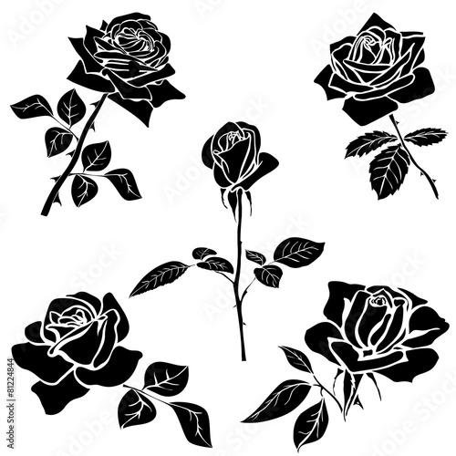 sylwetka-rozy