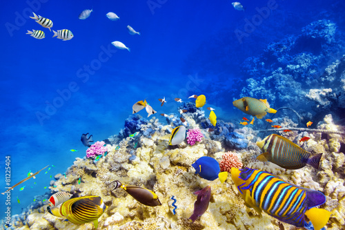 Foto op Aluminium Onder water Underwater world with corals and tropical fish.