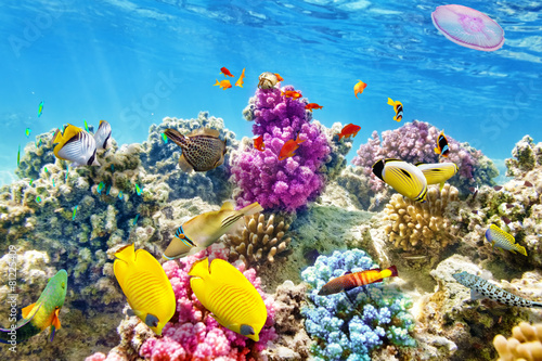 Underwater world with corals and tropical fish. Wallpaper Mural