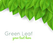 background with green leaves realistic