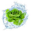 Gemüse 302