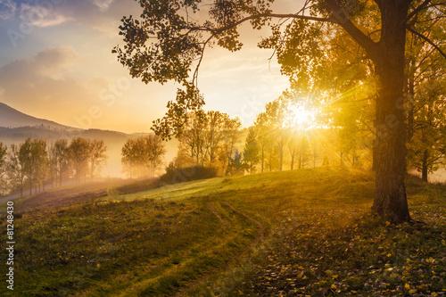 poranna-mgla-wsrod-drzew