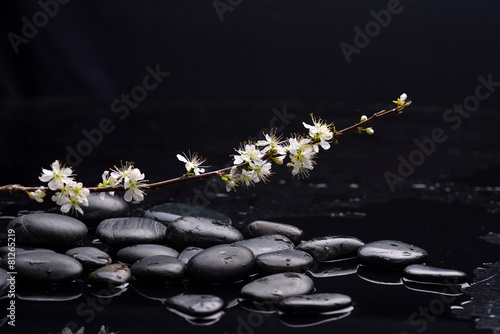 Foto auf AluDibond Spa branch cherry blossom with black stones on wet background