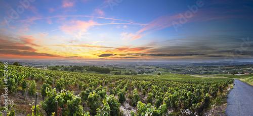 Photo sur Aluminium Vignoble Panorama of vineyards at sunrise time, Beaujolais, Rhone, France