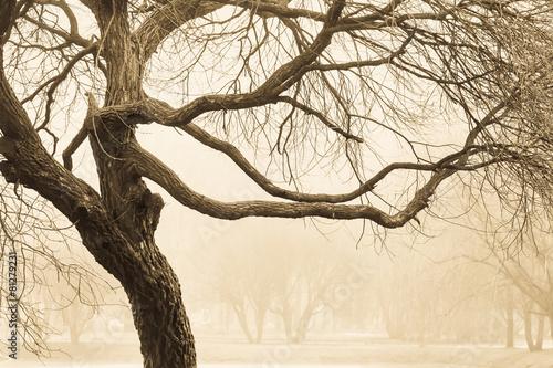 Photo  Twigs of big tree