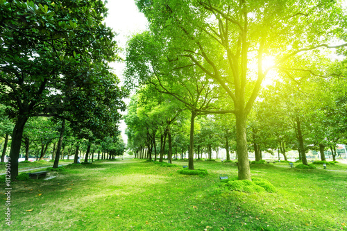 Fotobehang Bomen footpath and trees in park