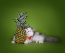 Fluffy Cat And Fruits Isolated...