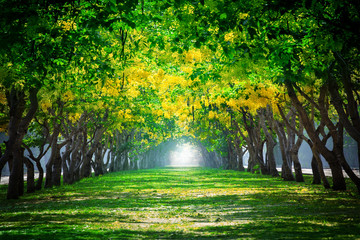 Fototapetafresh and green beautiful of summer blooming yellow flowers tunn