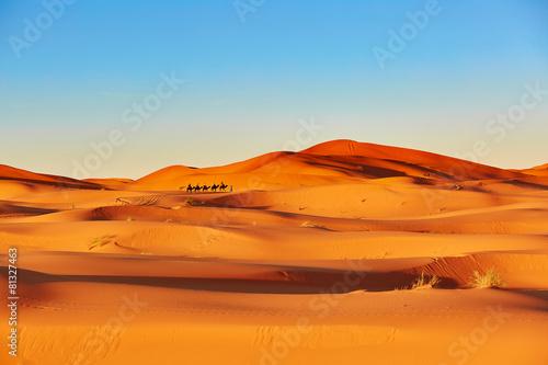 fototapeta na drzwi i meble Camel Caravan w Sahary
