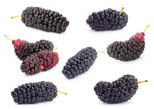 Black Mulberry Fruit Set