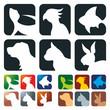 Pet Icons square