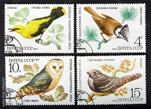 Fotografia  series of stamps printed in USSR, shows birds, 1979