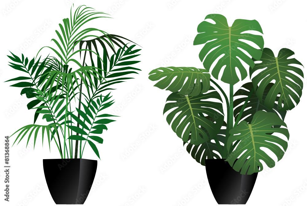 Fototapety, obrazy: Piante filodendro e kenzia in vaso