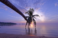 Tropical Sunset Palm Tree In Thailand