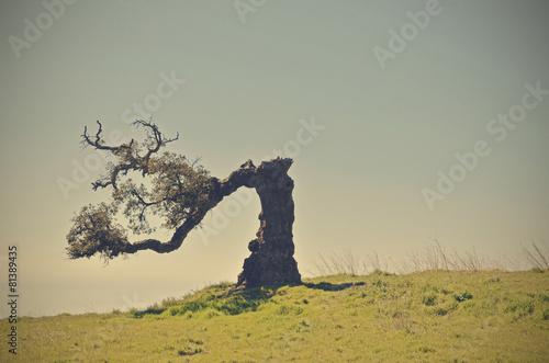 Fotografie, Obraz  old cork oak