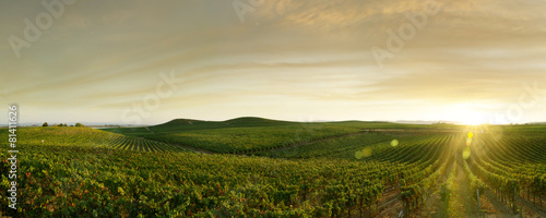 Foto op Canvas Wijngaard grape outdoor
