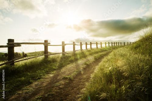 Obraz sunset path - fototapety do salonu