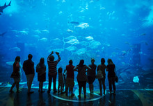 Aquarium In Atlantis Hotel, Wi...