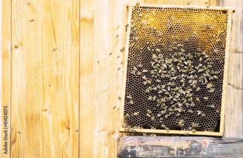 Tuinposter Vintage Poster Bienenwaben