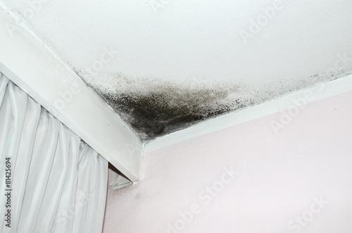 Fotografie, Obraz  Mold on the ceiling