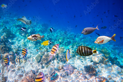 Poster Under water Tropical Coral Reef.
