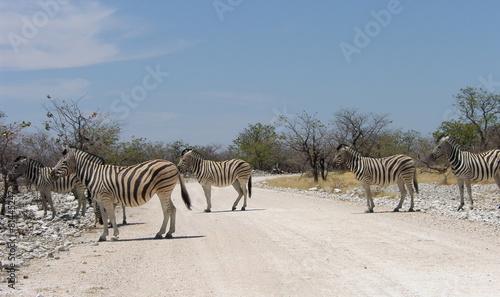 Fototapety, obrazy: zebra crossing