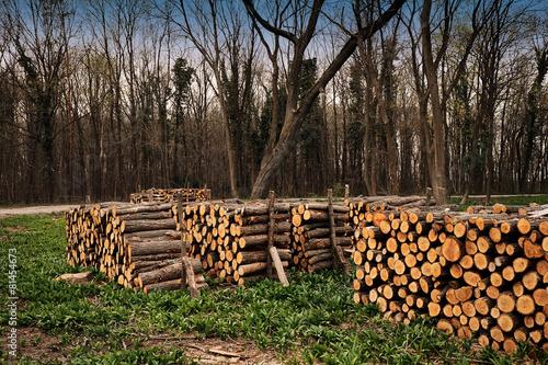 In de dag Brandhout textuur Deforestation industry