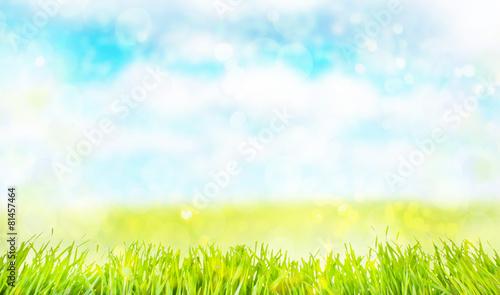 Papiers peints Blanc grüne landschaft