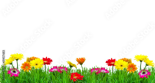 fototapeta na ścianę Kwiaty kolorowe Freisteller Karte