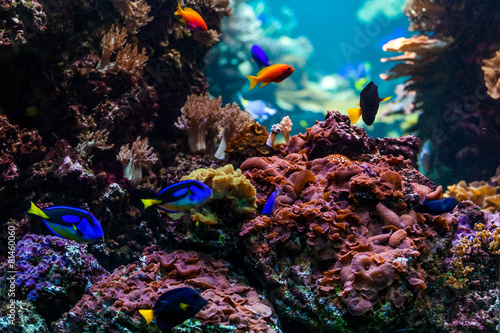 Foto op Canvas Onder water tropical fishes meet in blue coral reef sea water aquarium. Unde