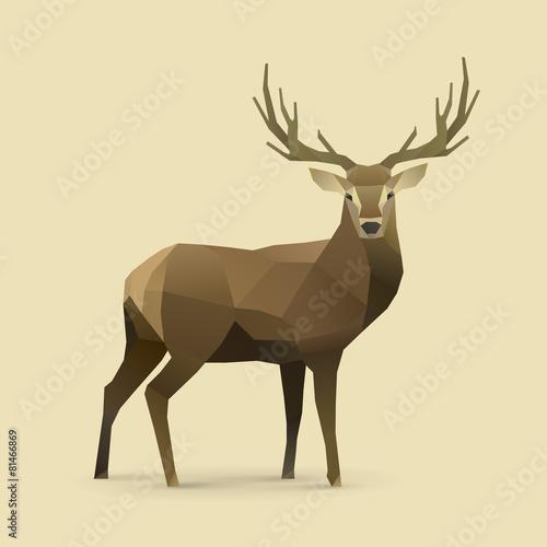 Photo  oh deer