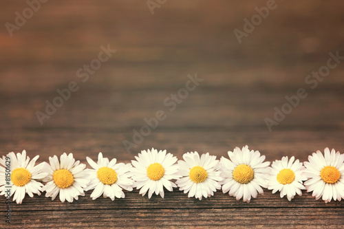 Foto op Aluminium Madeliefjes Gänseblümchen auf Holzhintergrund