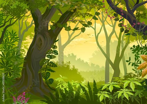 Fotografie, Obraz  Warm climatic Jungle