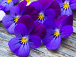 canvas print picture - beautiful wild violets