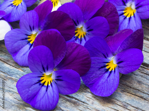 beautiful wild violets - 81512057